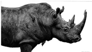 Rinoceronte Monte Fenera Casa grotte ara
